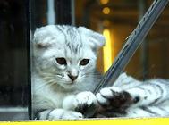 为了传宗接代,如何正确判断母猫发情?