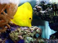 海水鱼缸怎么清洁?