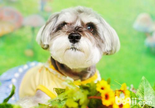 怎么改善狗狗啃咬物品的问题