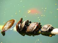 乌龟过冬要准备什么