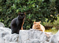 猫咪酒店:拥有的不仅仅是豪华享受