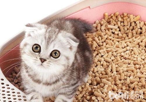 怎么训练猫咪用猫砂
