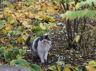 猫咪肾衰治疗过程中的并发症