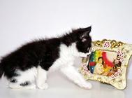猫咪超实用猫砂训练方法