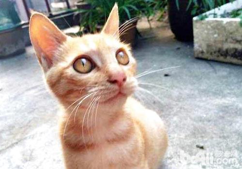 悲伤的故事:猫咪为什么吃多长不胖?-轻博客