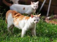 用什么方法来制止猫咪的恶劣行为?