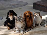 猫狗本同根?