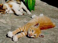消除家中隐患,让猫咪健康成长