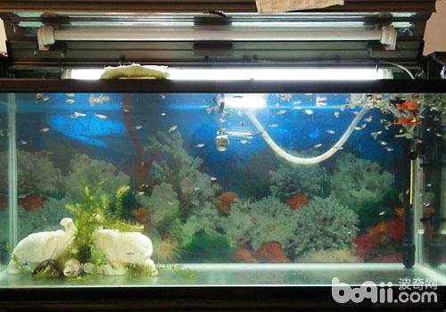 怎么清洗鱼缸的过滤设备?