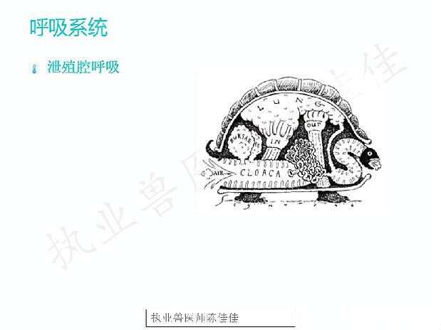 wwwhj9292.com皇家赌场 7