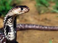 怎么鉴别不同毒蛇咬伤