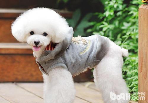 狗狗美容的必要性