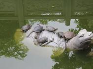 如何提高龟苗成活率