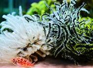 水族中珊瑚的清洗与使用方法