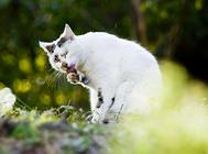 在游戏中进阶:猫咪训练不再单调