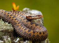 养殖蛇要注意哪些问题