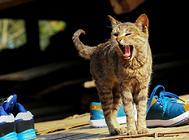 正确方法改善猫咪抓挠撕咬的习惯