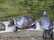 水龟越冬加温技术