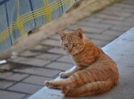 猫咪身上的花斑怎么产生的?
