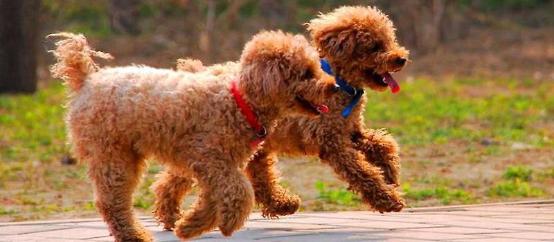 如何检查狗狗的咽部 狗狗常见病-波奇网百科大