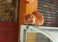 猫咪爱趴暖气也有害处?