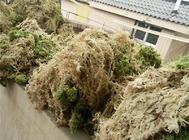 干水苔有哪些用处