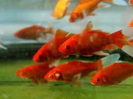 鱼缸保洁员——过滤系统