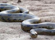 蟒类蛇的常见病