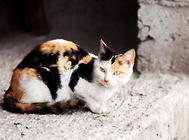 在给猫咪剪指甲前要做哪些准备?