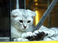 维生素D与猫咪健康