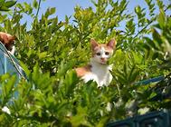 猫咪眼睛浑浊是什么原因?该怎么办?