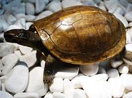 乌龟大便带虫怎么办?