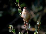 鸟类动物的一些新奇事
