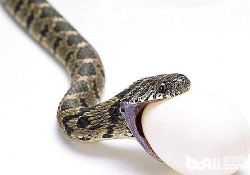 蛇都靠热量感应来探测