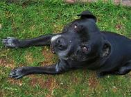 老年犬常见问题及饲养注意