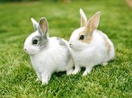 养兔怎么做好降温措施