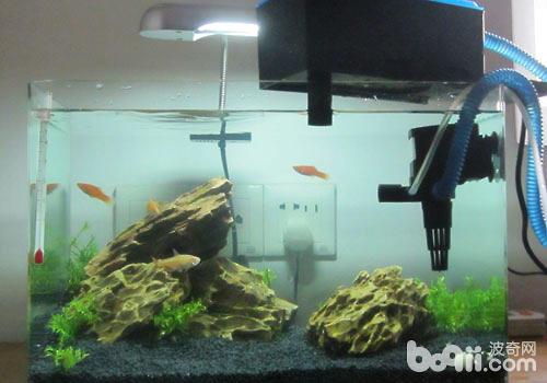 鱼缸过滤器是养鱼必备的器材之一,养鱼不得不面临的一个就是水质问题