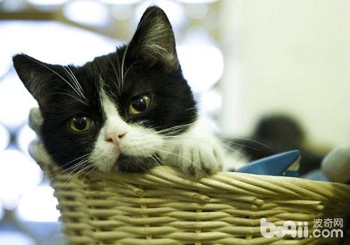 猫咪也有很多奇怪的行为呢