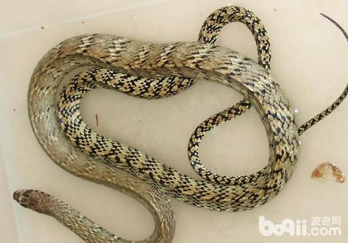 蛇箱养蛇的优缺点有哪些