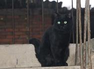 福来恩猫用滴剂的使用及注意事项