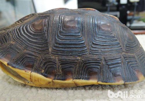 乌龟:我有特殊的保命技巧