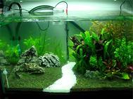 制作鱼缸造景重要的七个步骤