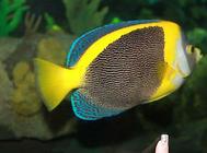 怎么自制鱼类的鱼食?