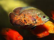 常见的鱼食配方介绍