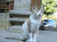 家猫起源于埃及?