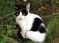 冠能猫粮怎么样?