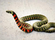 养蛇失败的原因有哪些