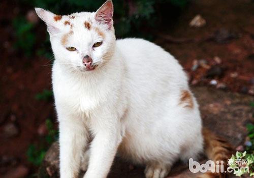 壁纸 动物 猫 猫咪 小猫 桌面 500_350