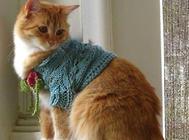 猫咪身上有皮屑是什么原因?怎么办?