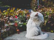 猫砂选择时要注意气味